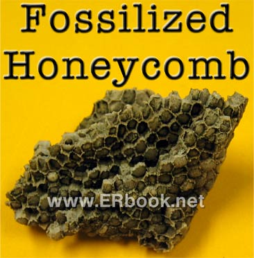 Fossilized honeycomb